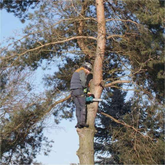 wycinanie drzew zgierz wycinanie drzew łódź